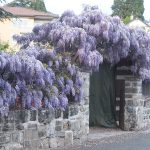 Цветы швейцарской ривьеры